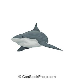Swimming shark sea animal vector Illustration on a white background