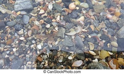 Swimming shrimps in the Atlantic Ocean at the irish west...