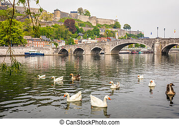 Swimming white and grey geese in Meuse river with Jambes ...