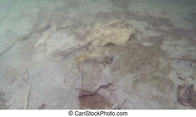 Swimming with Stingray Fl Keys