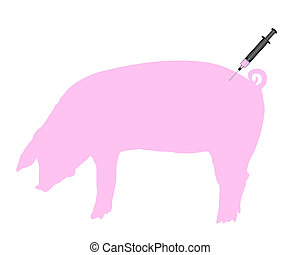 Swine gets an inoculation because of swine flu