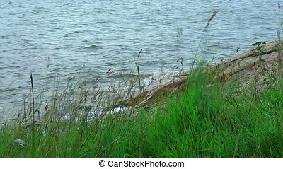 Swinging grass by the lake