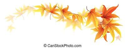 Swirl of autumn leaves