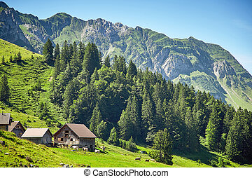 Swiss Alps landscape
