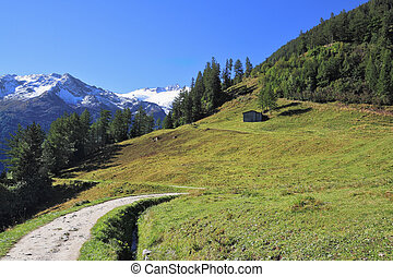 The scenic road among green alpine meadow