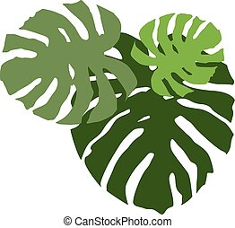 Swiss cheese plant leaves