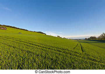 Swiss landscape with meadows