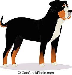 Swiss Mountain dog vector illustration