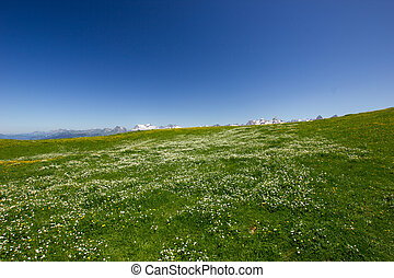 swiss mountains on a summer day with a meadow full of flowers in the foreground