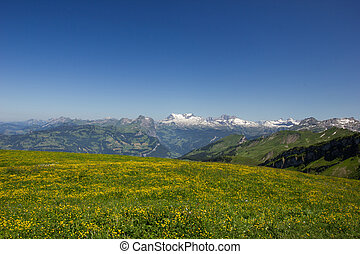 swiss mountains on a sunny summer day with a meadow full of flowers in the foreground