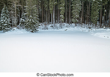 Swiss Winter - Forest covered in snow - A Swiss forest...