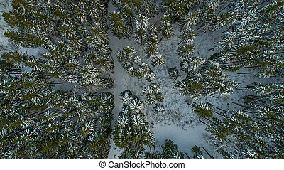Swiss Winter - Forest from above - A Swiss forest covered in...