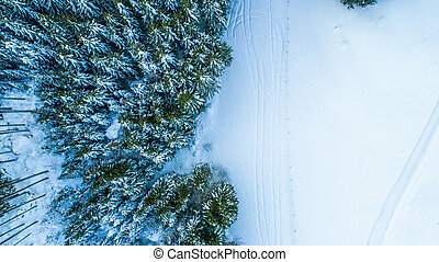 Swiss Winter - Trees from above - Trees shot from above with...
