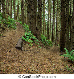 Switchback in Green Oregon Forest