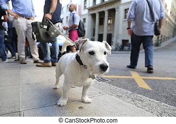 Switzerland, Geneva - 06 20 2018: Little dog on a leash
