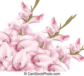 Sword lily gladiolus isolated. Vector