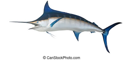 Swordfish Hanging on Wall - A swordfish or marlin hanging on...