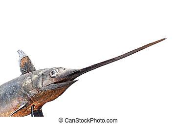 swordfish in a museum - swordfish ( Xiphias gladius )...