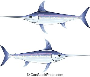 Swordfish vector illustration