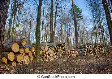 sylviculture, forestier, forêt, arbres