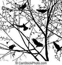 sylwetka, 2, gołąb, drzewa