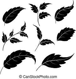 sylwetka, czarnoskóry, liście