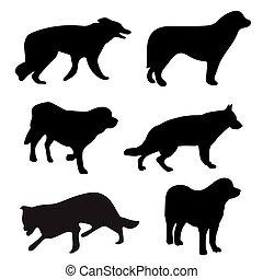 sylwetka, czarnoskóry, psy