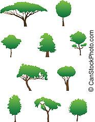 sylwetka, drzewo