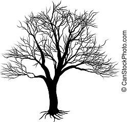 sylwetka, gołe drzewo