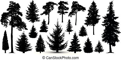 sylwetka, komplet, drzewa, las, vector., sosna, świerk