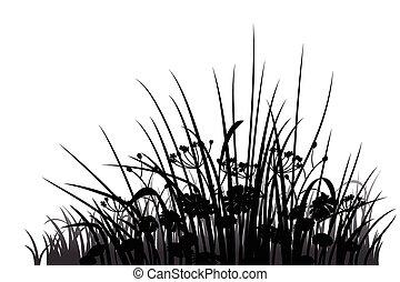 sylwetka, kwiaty, trawa