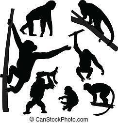 sylwetka, małpa, zbiór