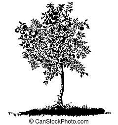 sylwetka, od, niejaki, młody, drzewo jabłka, na, łąka