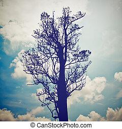 sylwetka, od, przedimek określony przed rzeczownikami, drzewo, z, błękitne niebo, z, retro, filtr, skutek