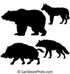 sylwetka, od, przedimek określony przed rzeczownikami, dzik, niedźwiedź, wilk, hiena, na białym, tło