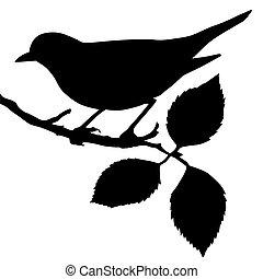 sylwetka, od, przedimek określony przed rzeczownikami, ptak, na, gałąź