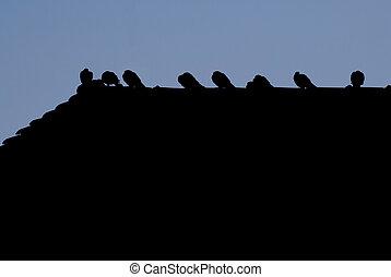 sylwetka, od, ptaszki
