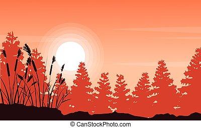 sylwetka, ordynarny, świerk, trawa, krajobraz, las