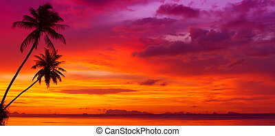 sylwetka, panorama, na, drzewa, ocean, tropikalny, zachód...