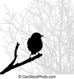 sylwetka, ptak, gałąź