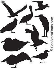 sylwetka, ptak