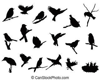 sylwetka, ptak, zbiór