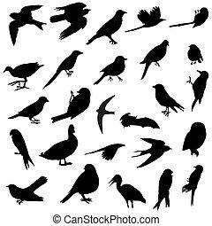 sylwetka, ptaszki