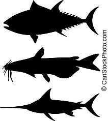 sylwetka, różny, komplet, fish, cielna