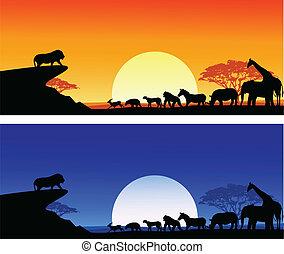 sylwetka, safari