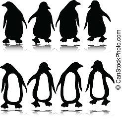 sylwetka, wektor, pingwin