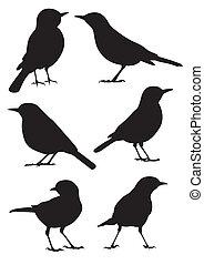 sylwetka, wektor, -, ptaszki
