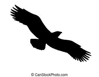 sylwetka, wektor, tło, wygłodniały, biały ptaszek