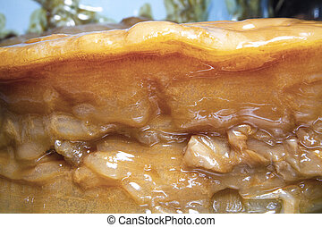 (symbiotic, scoby, bacterias, primer plano, viejo, grueso, yeast), cultura, imagen, kombucha