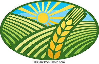 symbol), étiquette, blé, (wheat